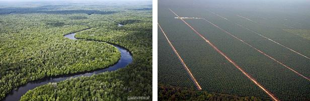 Rozdíl mezi původní krajinou a tou uměle vytvořenou.